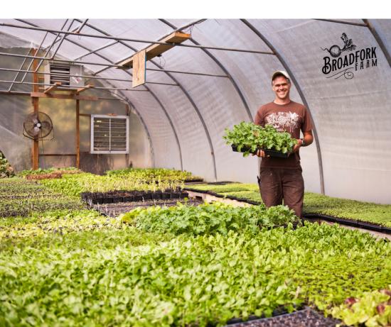 web Dan plant sale greenhouse.png