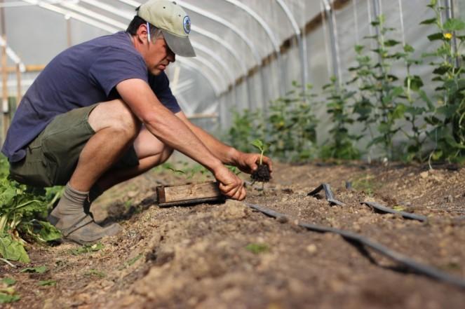 dan planting