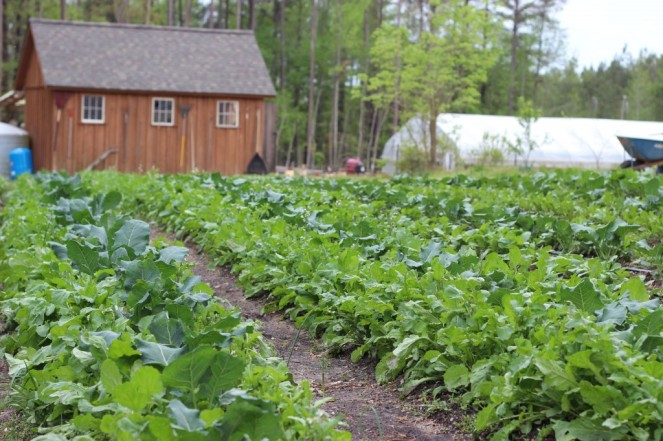 greens field shed greenhouse