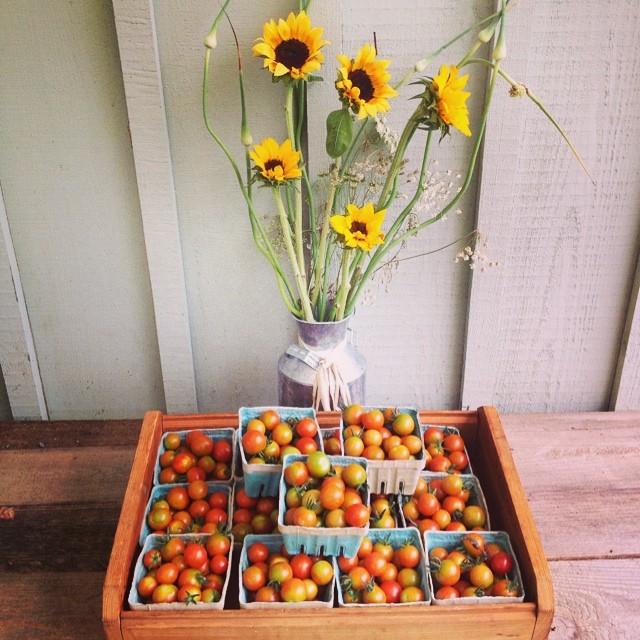 cherry tom sunflowers