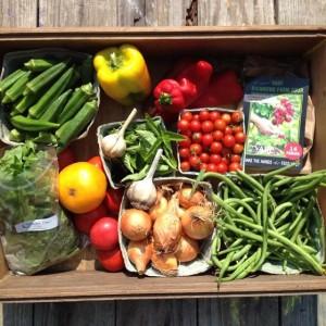 farm share 2014-08-20