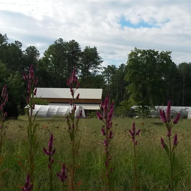 barn flowers