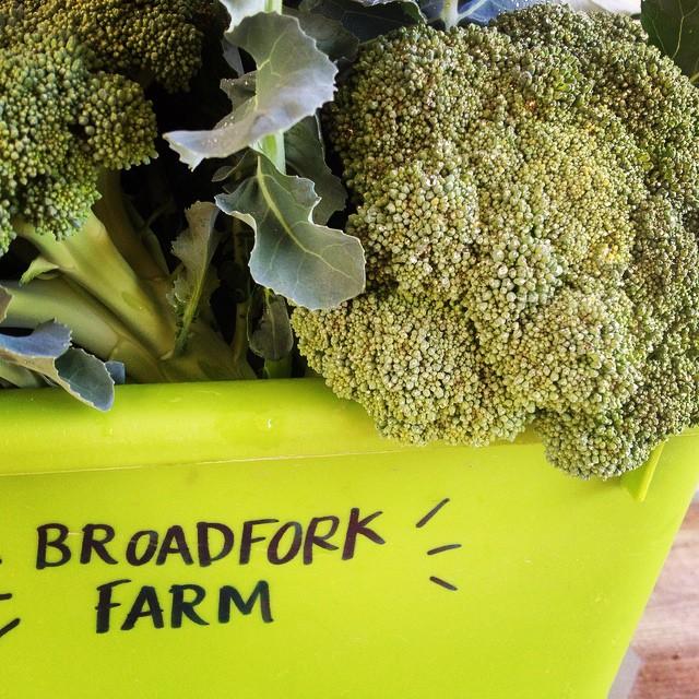 broccoli in tub