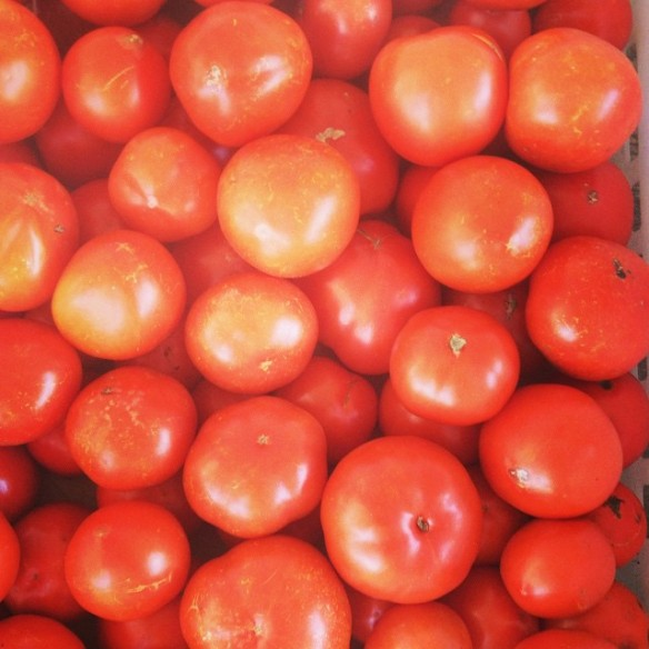 tomatoes october