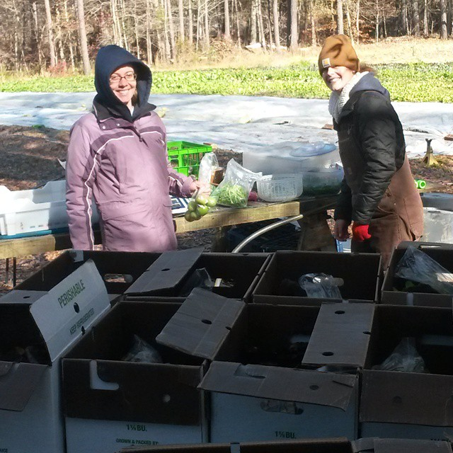 packing csa boxes