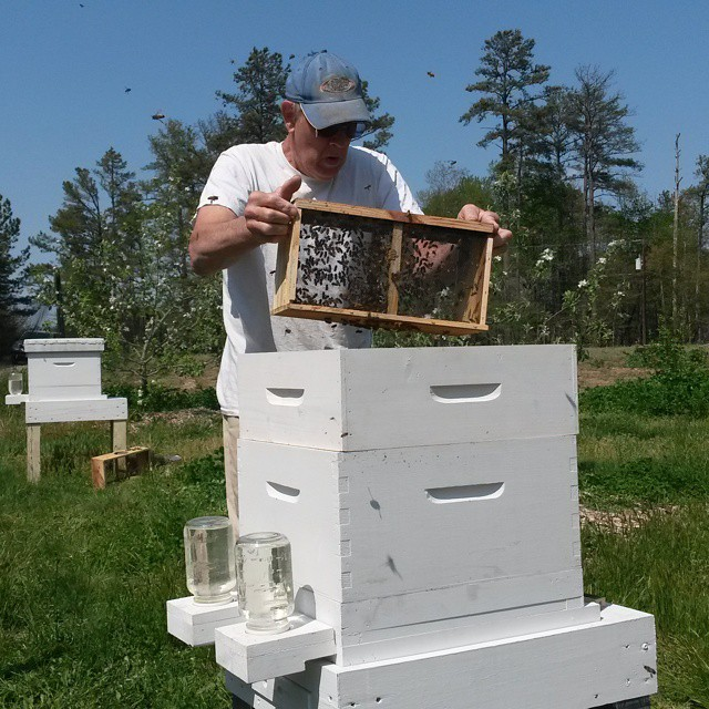 charles installing bees