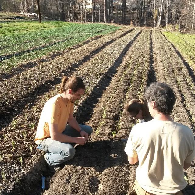 copra planting i