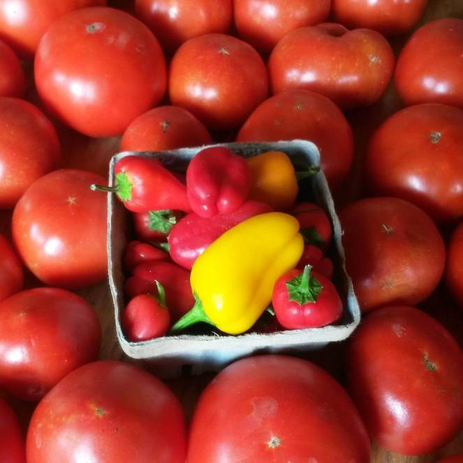 tomatoes lunchbox peppers