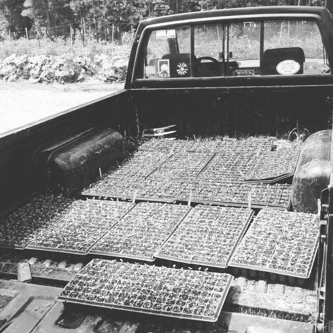 farm truck seedling trays