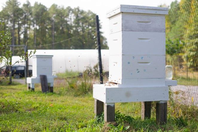 bee entrance