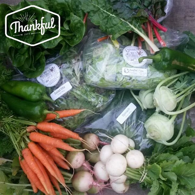 farm share 2015-11-24 thankful