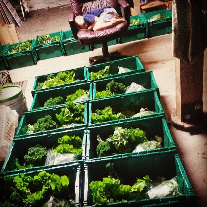 farm share csa boxes sleeping child
