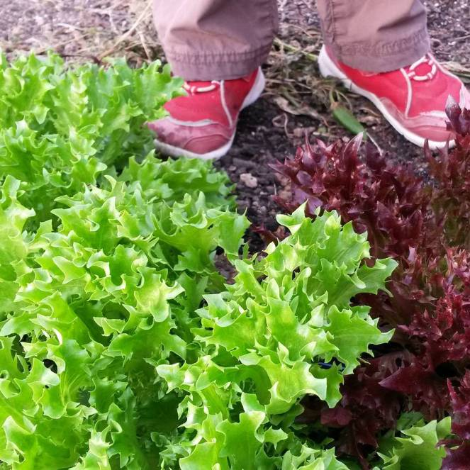 salad greens red shoes