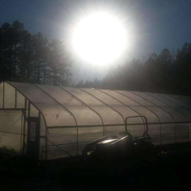winter sun high tunnel