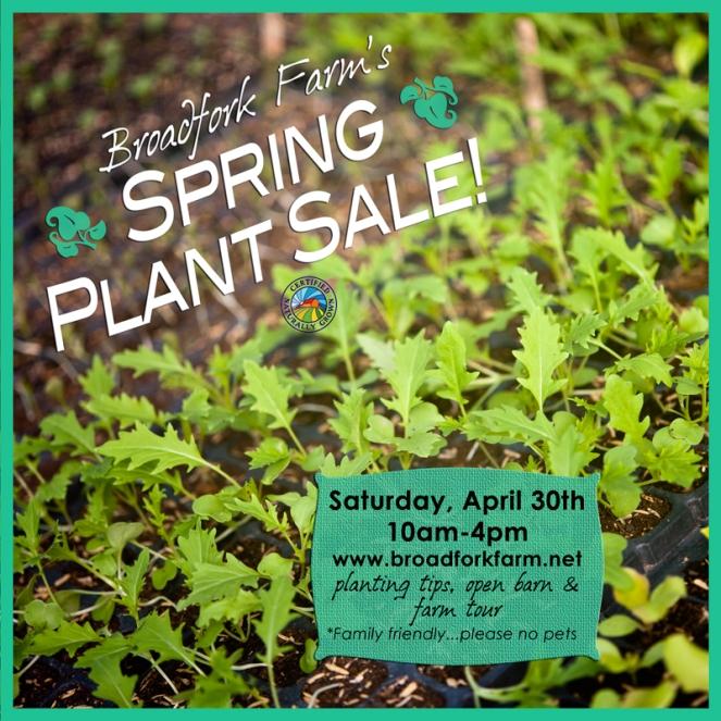 2016 Plant_sale_3