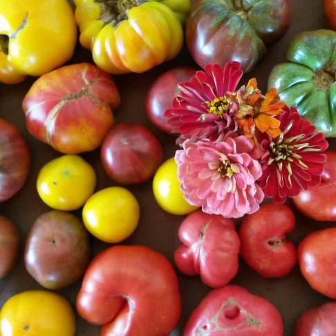 farmstand flowers tomatoes