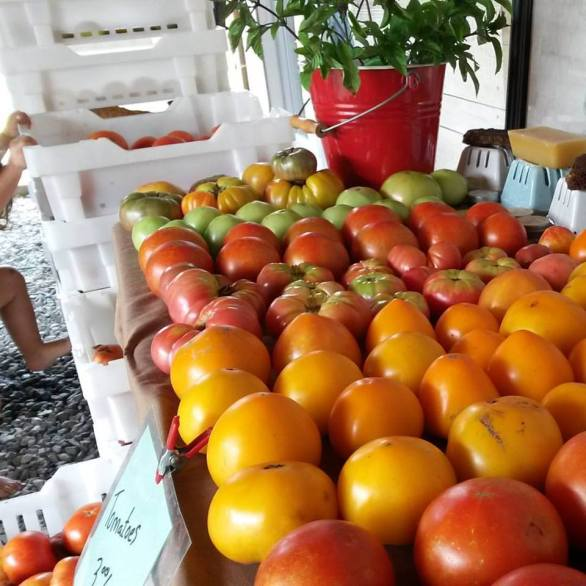 tomatoes and crates
