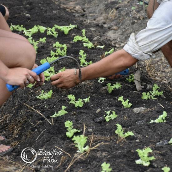 square salad planting