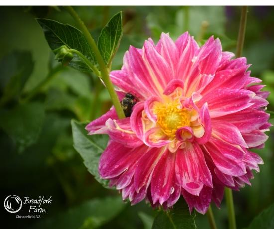 web-flower