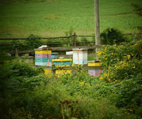 web-stone-barns-bee-hives