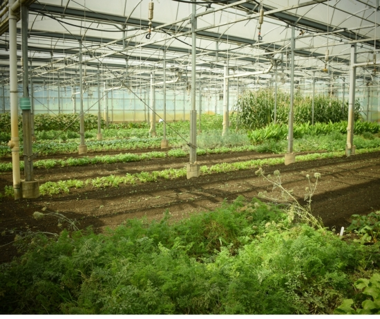 web-stone-barns-greenhouse