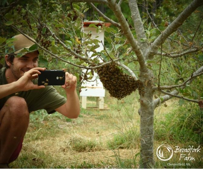 web-swarm-photog