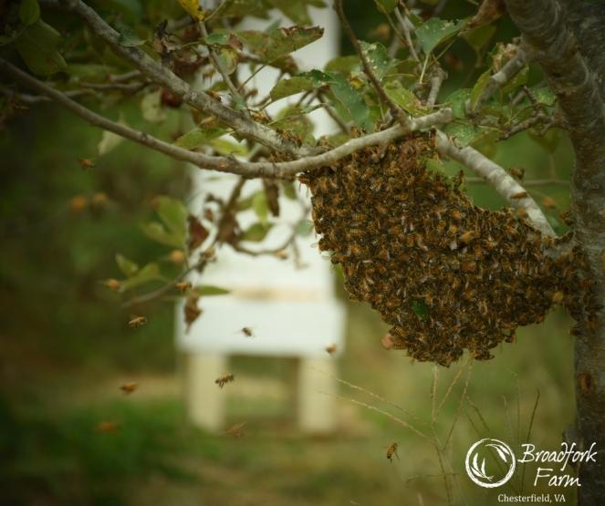 web-swarm-zoom