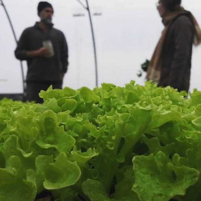 salad-visitor