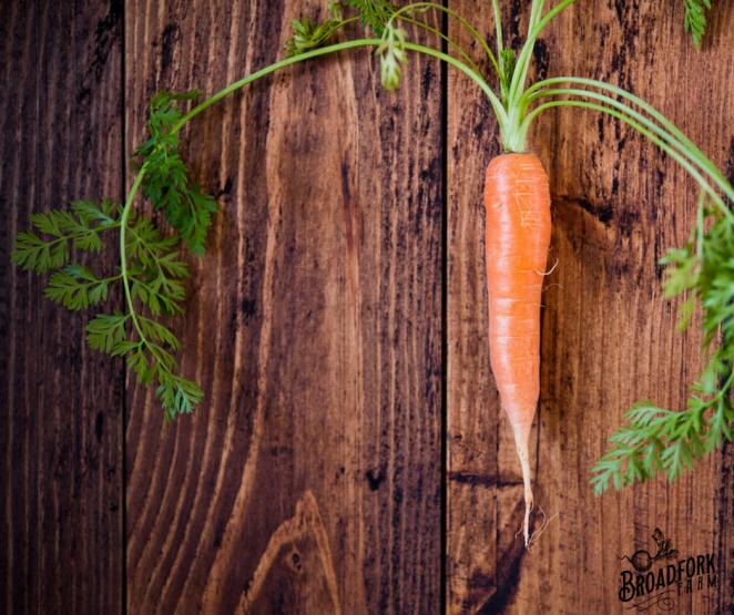 web-carrot