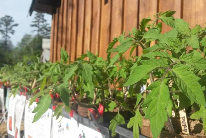 plant sale toms