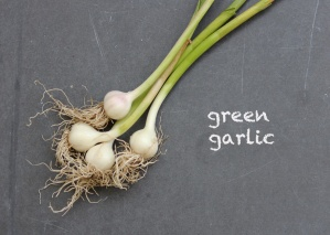 SFC_garlic_green_labeled